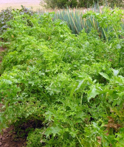 Bio-Asiasalat Feathergreen