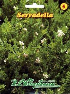 Gründünger Serradella 500g