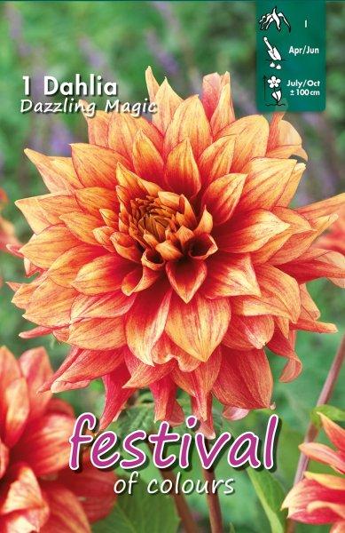 Dahlie Dazzling Magic