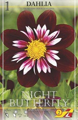 Dahlie Night Butterfly 1St.