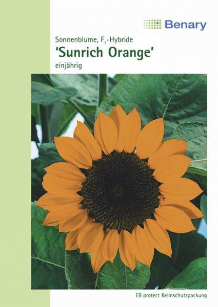 Sonnenblume Sunrich Orange ca.120cm