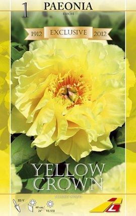 Pfingstrose Yellow Crown