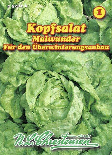 Kopfsalat Maiwunder