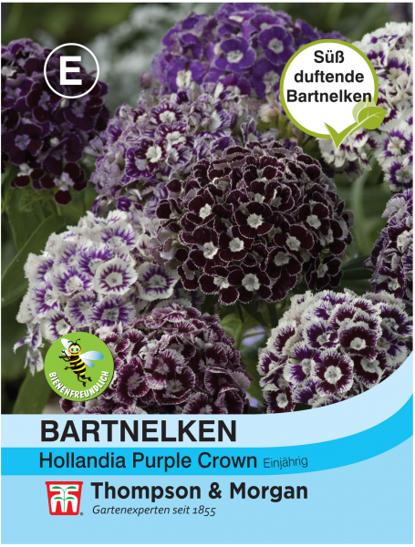 Bartnelken Hollandia Purple Crown