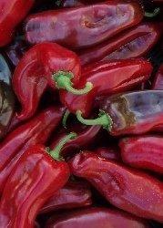 Chille Corno Rosso / 10 Samen