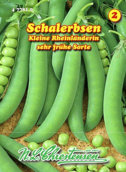 Schalerbse Kleine Rheinländerin