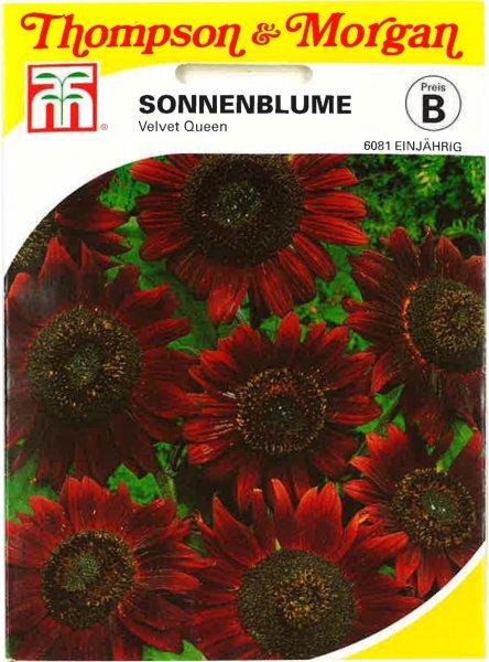 Sonnenblume Velvet Queen 100cm