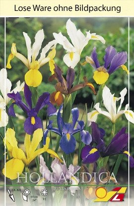 Iris Hollandica Mix (Lose)