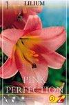 Trompete Pink Perf. 1St.
