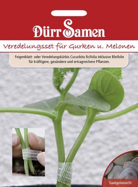 Veredlung Gurken/Melonen