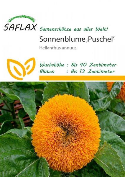 Sonnenblume Puschel 40cm