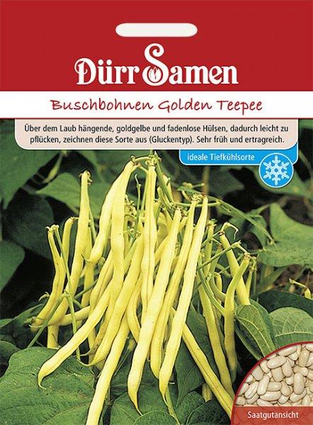 Buschbohne Golden Teepee