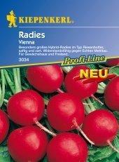 Radieschen Vienna