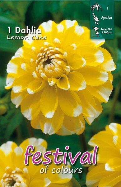 Dahlie Lemon Cane
