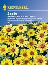 Zinnien Profusion Yellow