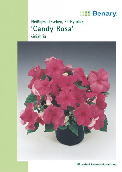 Impatiens Candy rosa