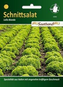 Schnittsalat Lollo Saatb.2m