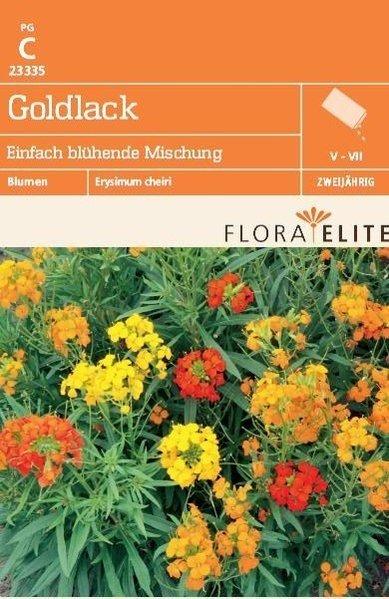Goldlack Einfach Blühend