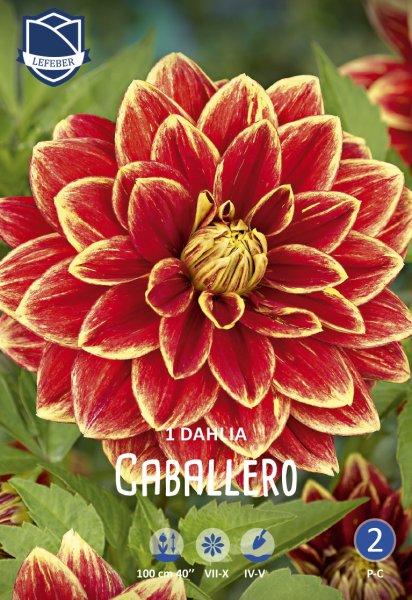 Dahlie Caballero