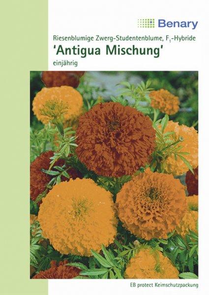 Tagetes Antigua Mix