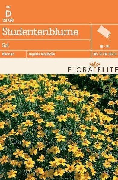 Studentenblume Sol