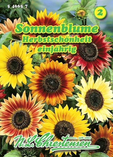 Sonnenblume Herbstschönheit ca.2m