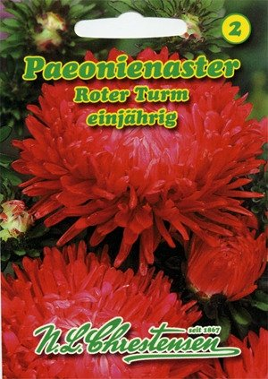 Aster Paeonien Roter Turm