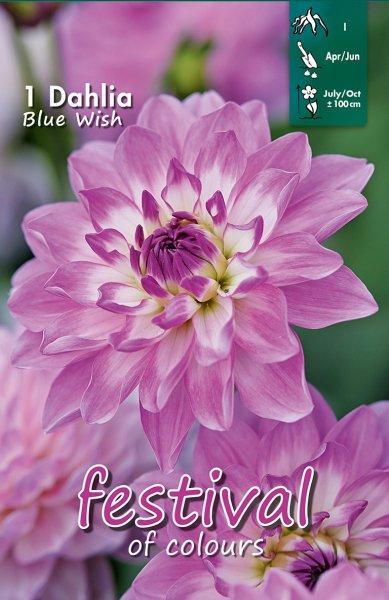 Dahlie Blue Wish