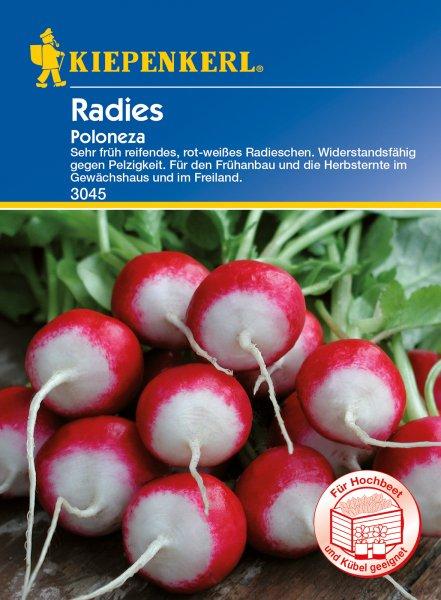 Radieschen/ Radies Poloneza