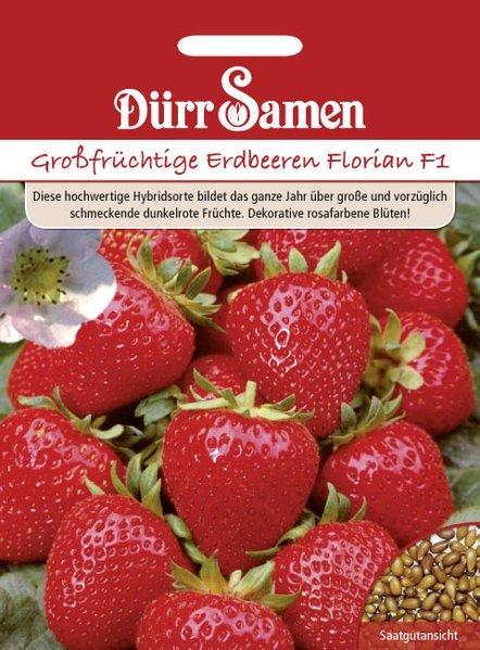 Erdbeeren Großfrüchtige Florian F1