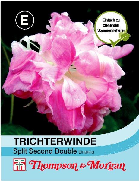 """Trichterwinde """"Split Second Double"""""""