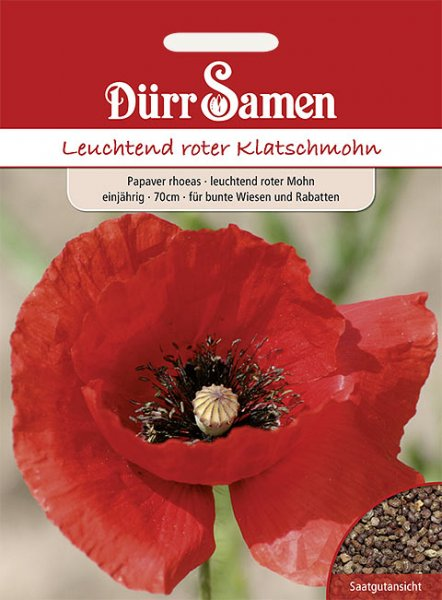 Klatschmohn rot Wildblume