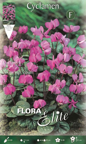 Alpenveilchen Coum ssp coum