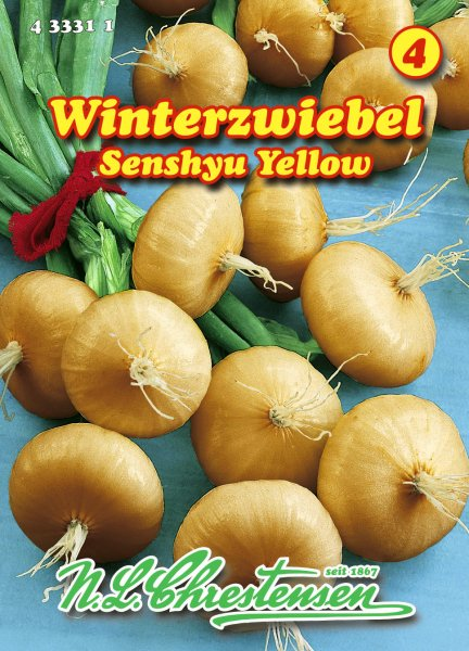 Winterzwiebel Senshyu Yellow