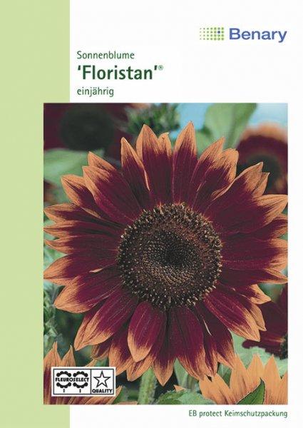 Sonnenblume Floristan ca.100cm