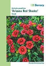 Kokardenblume Arizona Rote Töne