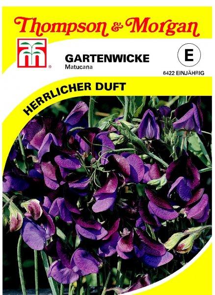 Gartenwicke Matucana