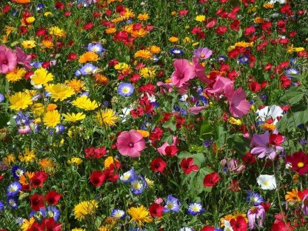 Blumenwiese Werratal 30m²
