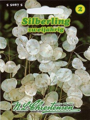 Silberling Lunaria