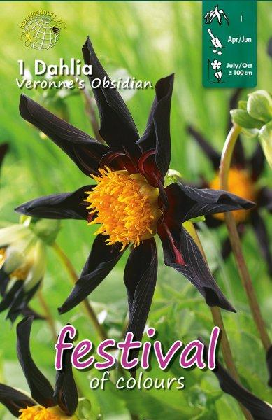 Dahlie Veronne´s Obsidian