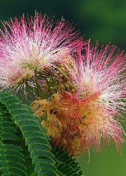 Schlafbaum - Pink