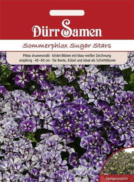 Phlox Sommer blau-weiss