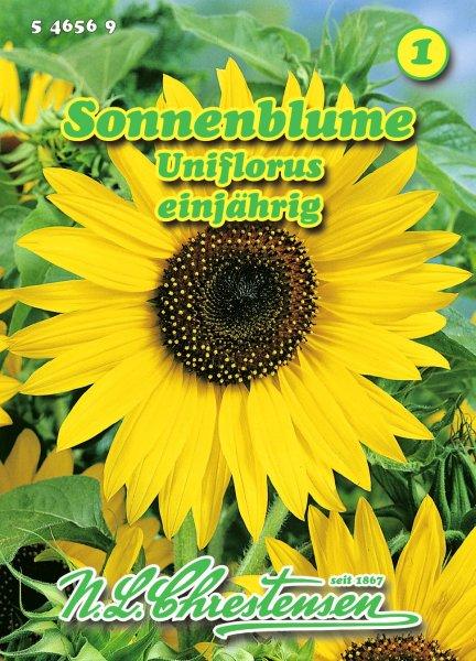 Sonnenblume uniflorus 3m