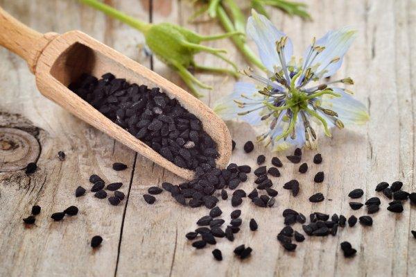 Schwarzkümmel Biosaat