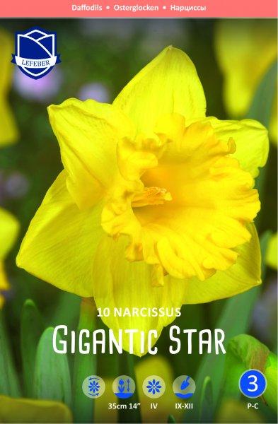 Osterglocke Gigantic Star