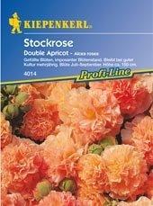 Stockrosen Double Apricot