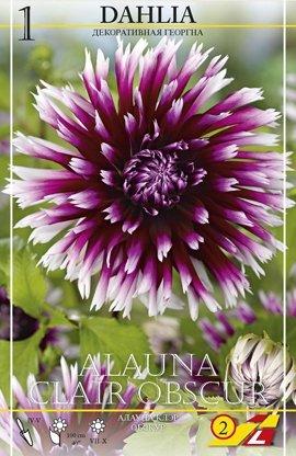 Dahlie Alauna Clair-Obscur