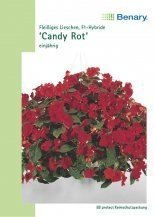 Impatiens Candy rot