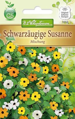 Schwarzäugige Susanne Mischung