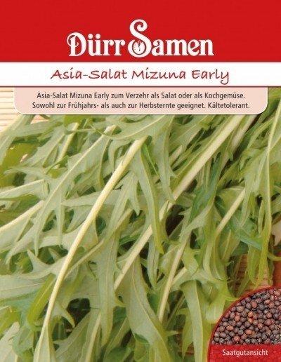 Asia-Salat Mizuna Early